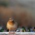 kaczka-krzywka-fot-mateusz-matysiak-3