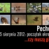 pechowa-13-tka-cover-photo-red