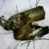 myszolow-w-sniegu-2-2013-01-24